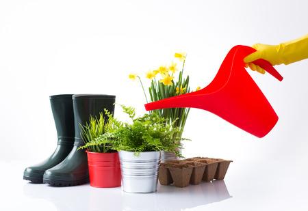 regando plantas: Regar las plantas