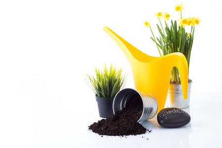 replanting: Garden equipment with green plant and a sign against a white background  Stock Photo