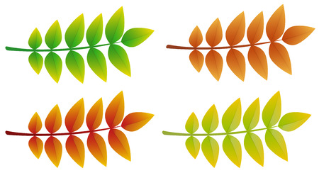 Colourful 3d ash leaves isolated on white background. Vector.