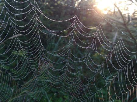 sol naciente: La tela de araña al lado del sol naciente