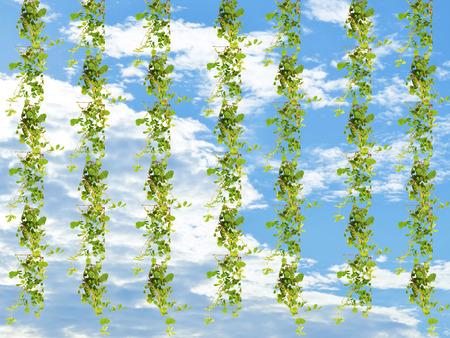 leaves frame: Marco de las hojas sobre fondo de cielo