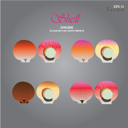 scallops: set of sea shell.vector illustration . scallops