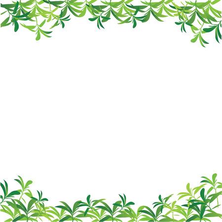 greenness: Leaves frame on white background.vector illustration.