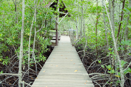 brackish water: mangrove forest.forest seaside.Thailand