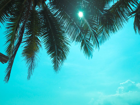 coconut  tree background with blue sky. Imagens