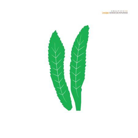 thai coriander or cilantro icon on white background. vector illustration.
