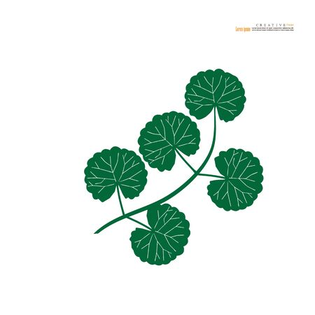 Centella asiatica icon on white background. Herbs help to heal inflammation. vector illustration.