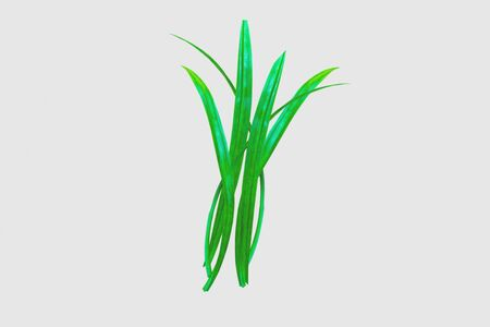 fresh pandan leaves on wood background-image