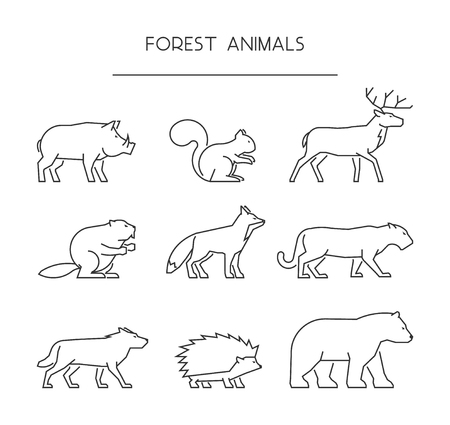 animals collection: Line set of forest animals. Linear silhouettes animals isolated on white. Vector icons boar, squirrels, deer, beaver, fox, puma, wolf, hedgehog and bear.