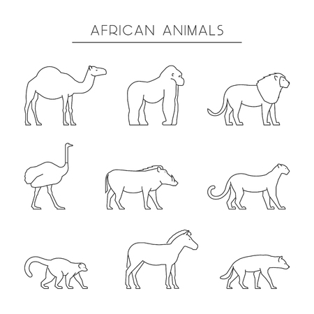 dromedary: Vector line set of african animals. Outline dromedary, gorilla and lion. Line icon ostrich, warthog and leopard. Linear zebra, lemur and hyena. Linear silhouettes african animals isolated.