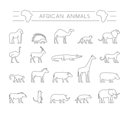porcupine: Vector set outline African animals. Vector line silhouette of gorila, warthog, porcupine and dromedary. Geometric linear animals of Africa. The outline silhouette ostrich, hyena, springbok and zebra. Illustration