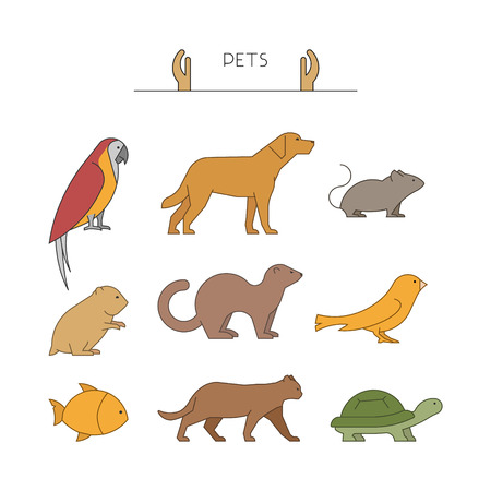 group of pets: Outline set of pets. Linear silhouettes animals isolated on white. Line group of pets. Vector icons parrot, dog, mouse and hamster. Outline silhouette hamsters, canaries, cats and turtles.