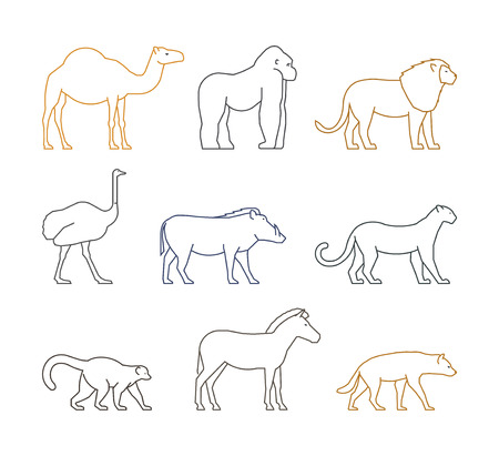 dromedary: Colored vector line set of african animals. Outline silhouette dromedary, gorilla and lion. Line icon ostrich, warthog and leopard. Linear zebra, lemur and hyena.