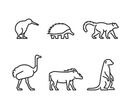 echidna: Vector black outline set of animals. Line silhouettes wild animals isolated on white. Modern icons kiwi, echidna and lemur. Linear symbol ostrich, warthog and meerkat.