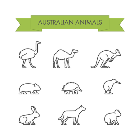 australian animals: line set of australian animals. Linear icon dingo, koala, kangaroo, echidna and kiwi.