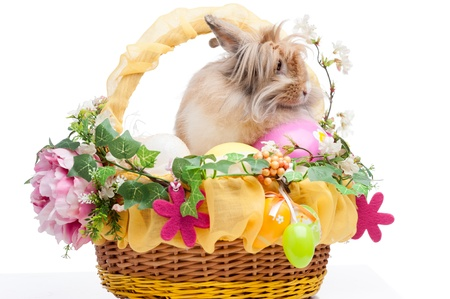 easter composition. rabbit in easter basket isolated on white background Stock Photo - 18627081
