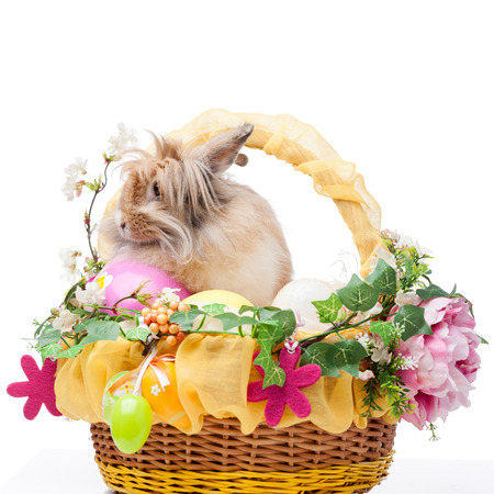 easter composition. rabbit in easter basket isolated on white background photo