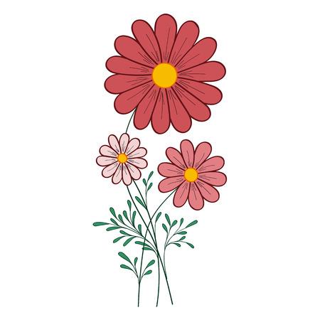 daisy vector: red daisy vector illustration for greeting card