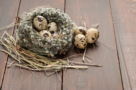 quail eggs in a nest over dark old wooden background Stock Photo