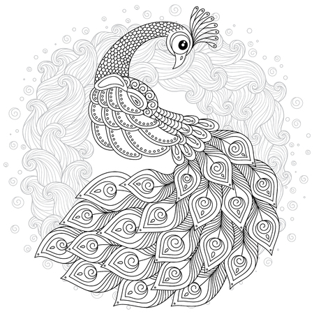 Hand drawn Peacock for anti stress Coloring Page with high details, isolated on white background, illustration Vector monochrome sketch. Bird collection.