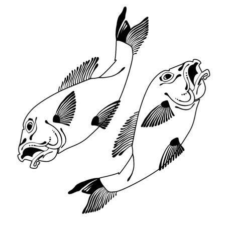Handgezeichnete Koi-Fische. Japanische Karpfen-Linienzeichnung für Malbuch. Gekritzel. Zeichen mit der Bedeutung Karpfen