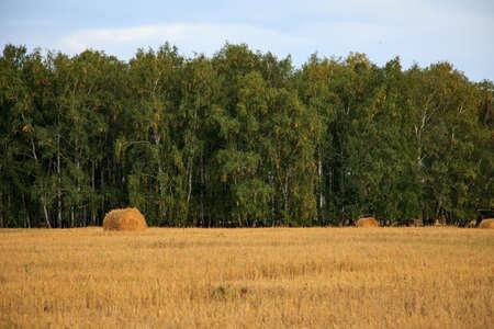 bales: Straw bales in irish countryside