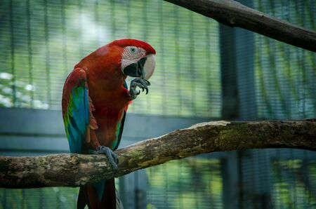 Colorful parrot on a branch in a zoo.