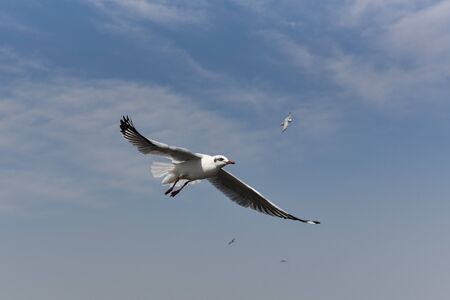 close-up of a seagull flaps its wings and flies against a blue sky.