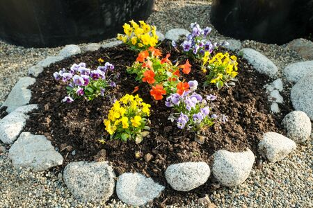 beautiful multi-colored flowers growing on a flower bed. Stock fotó