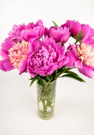 beautiful pink peonies in glass vase isolated on white. Standard-Bild