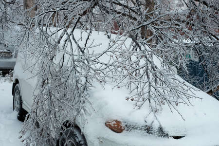 A parked car is littered with white snow and branches of tree. Autumn and winter background.