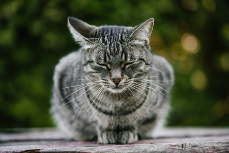 A sad street cat sitting with closed eyes on a wooden bench against a background of green plants. A non-pedigreed cat, circles in blurred background. A pet in nature. Bokeh. The village, the park. Summer.