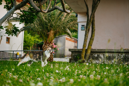 The street cat is crouching, hunting in the gurden. Mediterranean nature. At the background - the walls of houses, palm trees, flowers, trees. Stock Photo