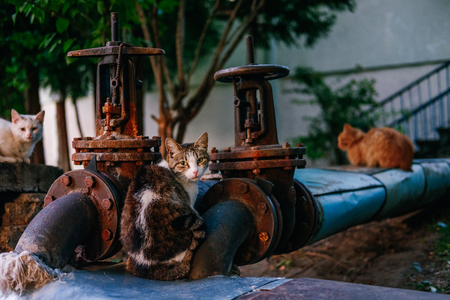 Street cats lie on warm water pipes. A grumpy look. Abandoned animals. Animals in urban infrastructure. Large rusty pipes, valves.