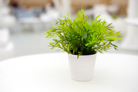 Green artificial plant in a white pot on the table. Light interior, blurred background.