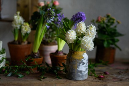 In the gardeners workshop. Decorative flowers in pots. Botanic style wedding accessories. Hyacinths and roses. Moody atmosphere.