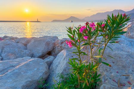 Seaside holidays. Pink flowers, sunset, lighthouse, ship, mountains. Mediterranean, adriatic landscape. Summer, rest, serenity