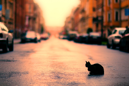 Abandoned, homeless pets. Silhouette of a stray cat kitten against a city street background, parked cars. Sunset lighting, warm toning. Human Indifference. Copyspace, place for text