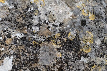 Natural rock, wild stone with lichen. Seamless abstract background photo texture. Stock Photo