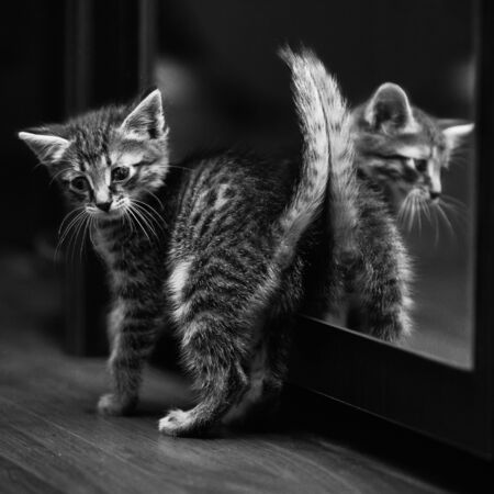 Kitten plays at home. A square, black and white shot. Street cat, adopted. Charity, volunteering, kindness.
