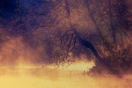 A beautiful tree on the river bank, a lake in the dawn light. Morning fog.