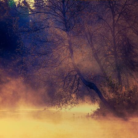A beautiful tree on the river bank, a lake in the dawn light. Morning fog. Square 1:1 shot