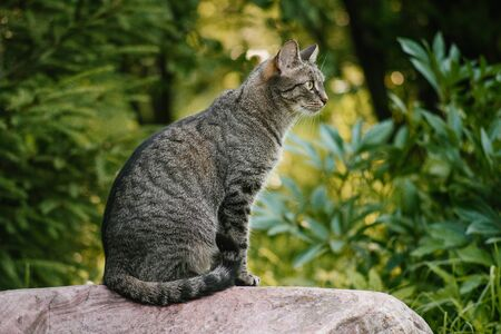 A domestic non-pedigreed brown cat in the center of the frame sits on a stone in full growth. Background of plants. Yellow-green background. Circles in blurred background. A pet in nature. Bokeh. The village, the park. Summer.