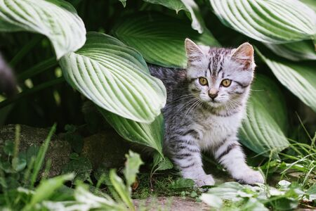 A cute kitten is playing in the garden. Pet on the nature concept