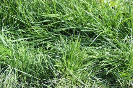 background green grass Stock Photo