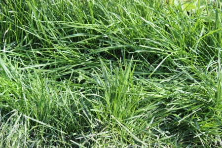 background green grass Stock Photo