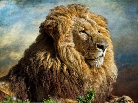 lion face: The lion King, profile image