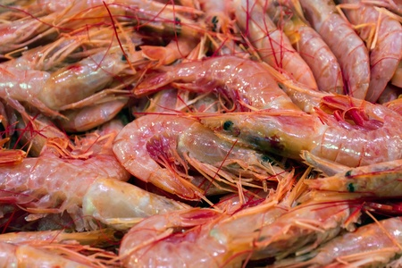 seafruit: Fresh prawn for sale at the market