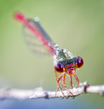 Close up shot of a dragon fly Close up shot of a dragon fly