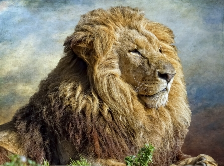 The lion King, profile image